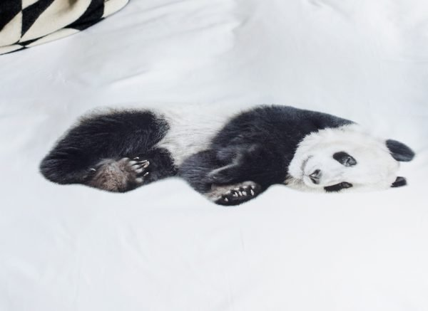 Snurk dekbedovertrek flanel Lazy Panda